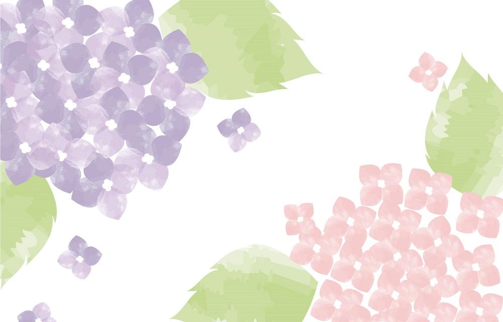 紫色とピンク色のアジサイの花の「はがき」無料テンプレート素材