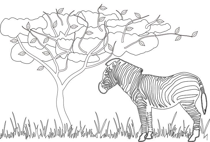 動物「しまうま」の大人の塗り絵の無料テンプレート素材