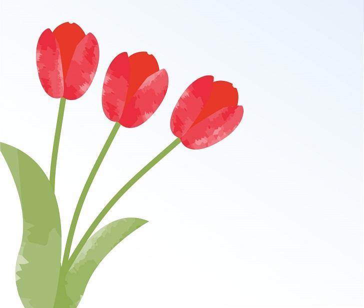 春に咲く花のチューリップの無料イラストの葉書サイズのメッセージカード