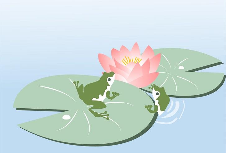 睡蓮の花&蛙のイラスト入り無料メッセージカードのハガキサイズ