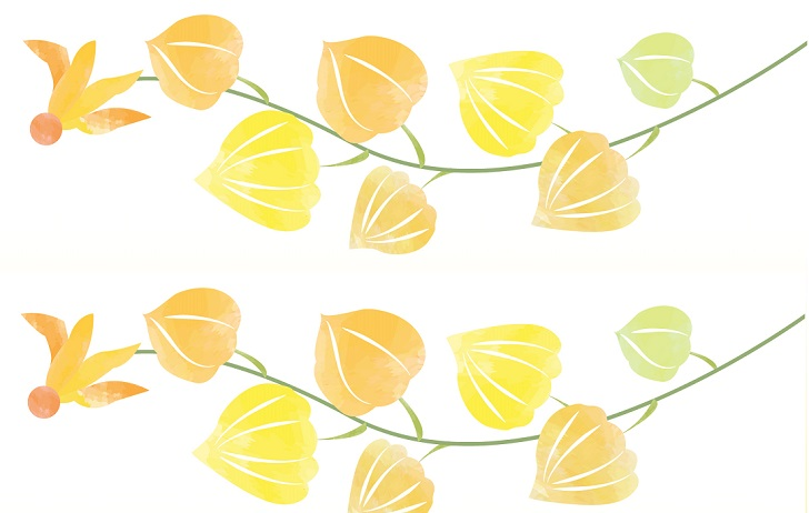 7月の鬼灯の花・かわいい無料イラストのメッセージカード