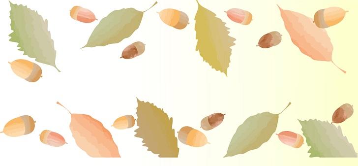 秋 冬 どんぐり