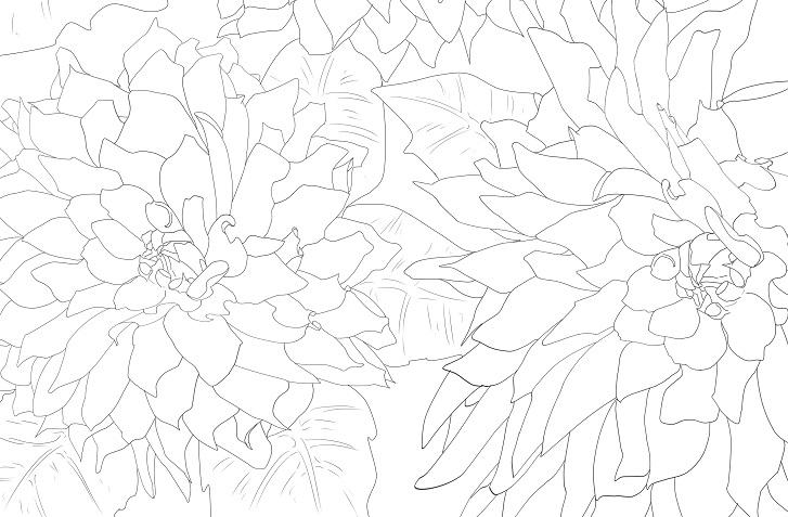 【夏の花】ダリアの花の無料イラスト大人の塗り絵・白黒